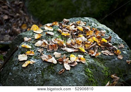 autumn leaves on a stone