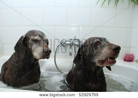 Dogs In The Bathtub