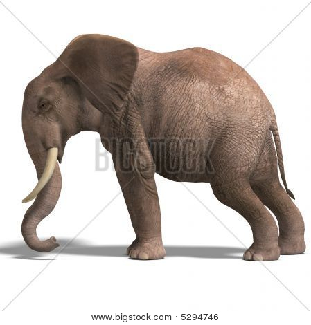 Huge Elephant