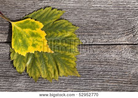 Autumn leaves on a wooden plank.