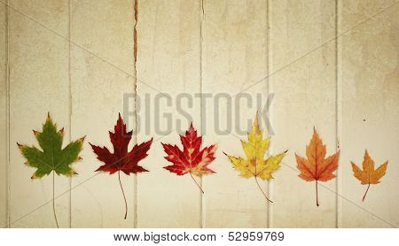 Six maple leaf on a row on a wooden vintage background