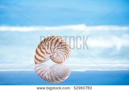 small nautilus shell  and reflection with ocean, wave and seascape, shallow dof