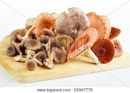 Picked mushrooms