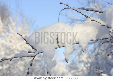 Iced Brach