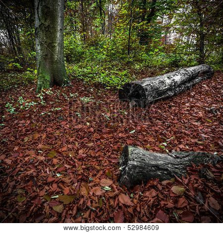 Dead And Standing Trees In A Forest Isolated With Colourful Leafs Of Autumn