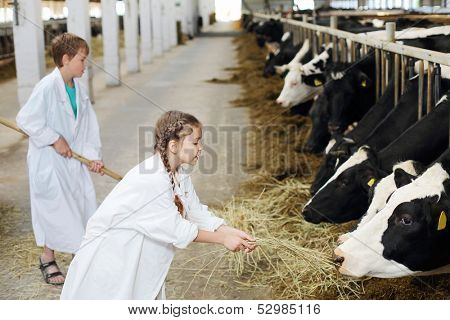 Happy boy with hayfork and girl in white robe give hay to cows at large farm. Focus on girl.