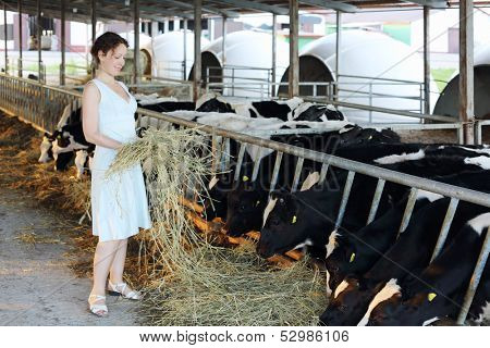 Woman in dress holds hay near stall with cute calves in big cow farm.