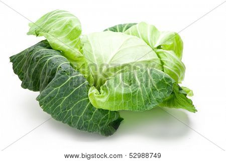 Fresh harvested cabbage with the outer most leaves still intact and open. Isolated on white with natural shadow.