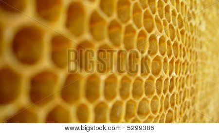 Honey Cells