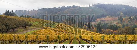 Dundee Oregon Vineyards Scenic Panorama