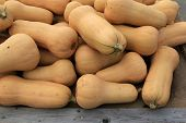 stock photo of butternut  - Harvest of delicious butternut squash at farmers market - JPG