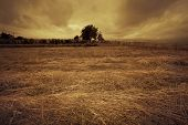 picture of dry grass  - small farm house and tree with dried grass in front at sunset before storm - JPG