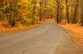 The road through the autumnal forest.