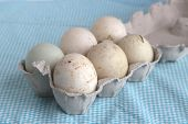 foto of duck egg blue  - Duck fresh eggs in a carton pack on blue background.