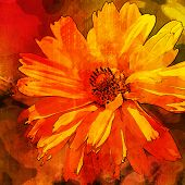 art floral vintage orange, red and brown background with asters