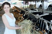 Woman in dress shows fresh hay near stall with cute calves in big cow farm.