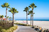 stock photo of southern  - Beach and Palm Trees in San Diego - JPG