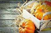 foto of fall-wheat  - Autumn harvest setting with pumpkins and corn - JPG