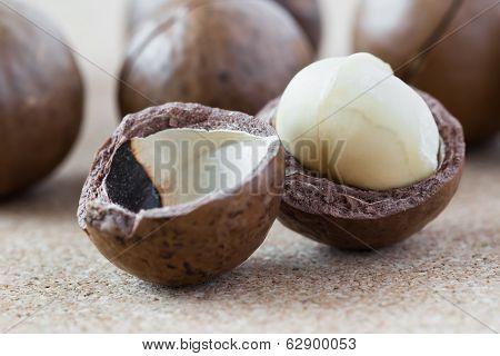 Cracked Macadamia Nut, Close-up.