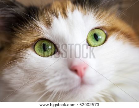 Close Up Of Green Cat Eyes
