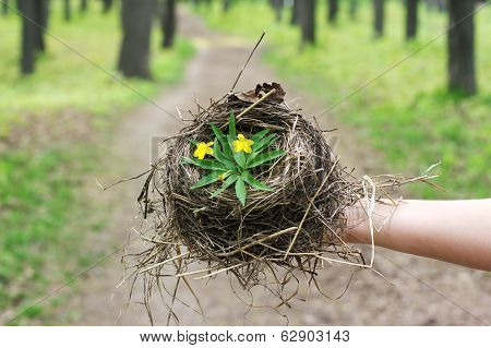 Empty Bird's Nest Closeup
