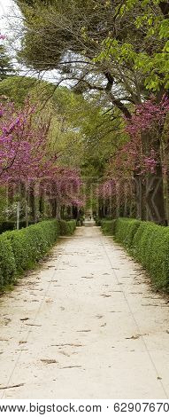 Garden Footpath With Blossom Trees.