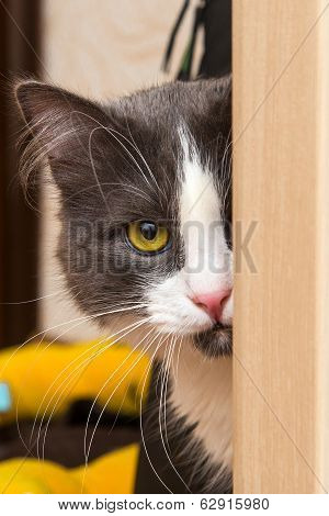 Cat With Yellow Eye
