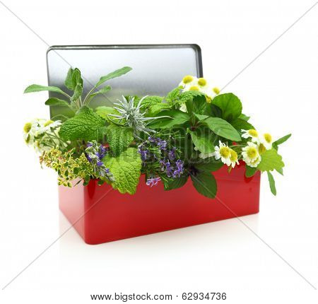 Fresh herbs in a red box