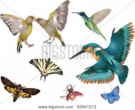 Amazing nature set - world of wings