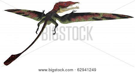 Eudimorphodon Profile On White