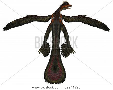 Microraptor Profile On White
