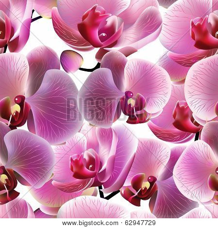 Orchid seamless pattern. Vector, EPS10