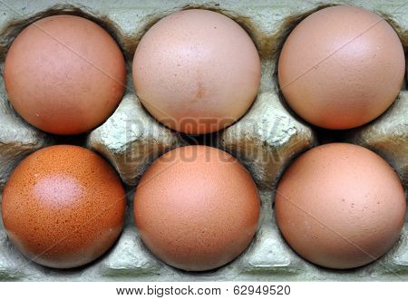 Fresh eggs in Plat