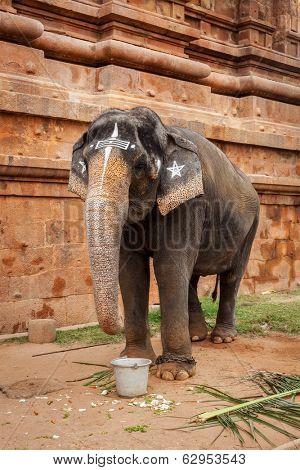Elephant in Hindu temple Brihadishwarar Temple, Thanjavur, Tamil Nadu, India