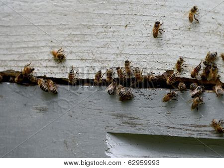 Close-up Of Bees Swarming Bee Hive