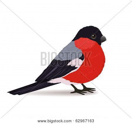 Winter bullfinch bird