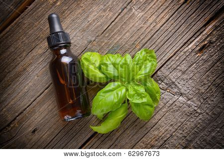 Basil organic essential oil use for food or aromatherapy