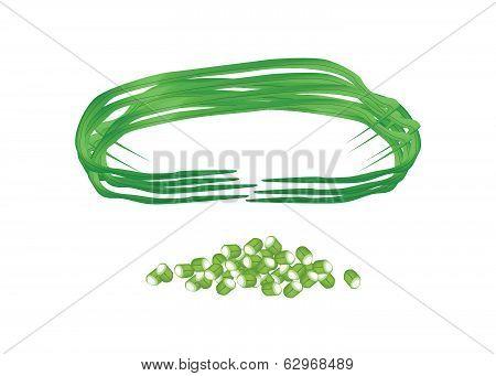 Fresh Chinese Long Beans On White Background