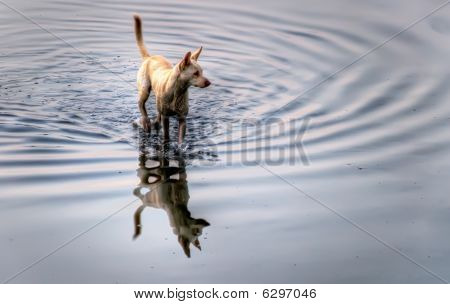 Dog On The Water