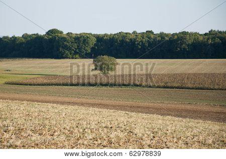 Barren Field Besides a Forest