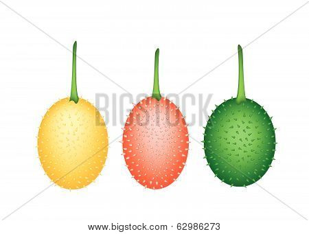Three Fresh Teasel Gourds On White Background