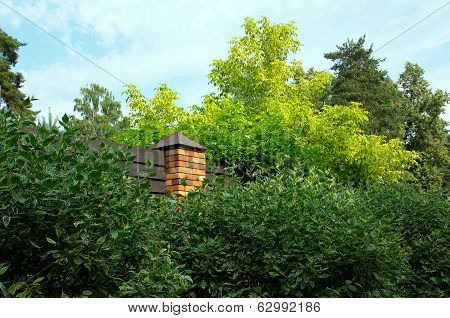 Fence With Brick Around Green Benjamin Ficus Trees And Pines