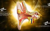 picture of inner ear  - Digital illustration of Ear anatomy in colour background - JPG