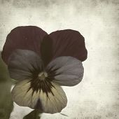 stock photo of viola  - textured old paper background with garden viola - JPG