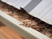 pic of spring-cleaning  - Cleaning gutters in Spring or fall of pine needles