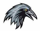 picture of caw  - Black raven head for mascot - JPG