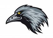pic of caw  - Head of black raven for mascot - JPG
