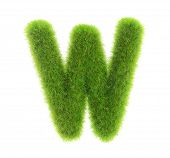 grass letter w isolated on white background