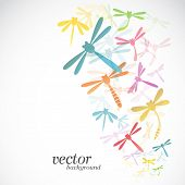 picture of dragonflies  - Dragonfly design on white background  - JPG