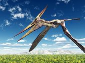 picture of pteranodon  - Computer generated 3D illustration with the Pterosaur Pteranodon - JPG